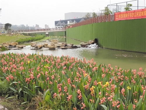 沙江河由黑臭小河变身美丽的湿地公园