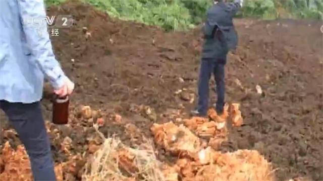 江西特大跨省非法倾倒有毒污泥案宣判 支付修复费用1446万元