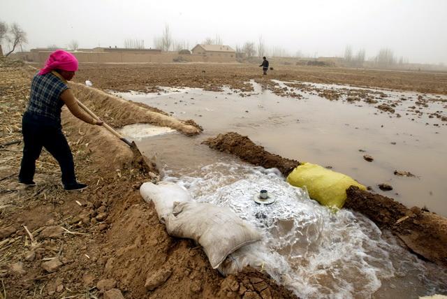 在西北地区,农民们普遍延用大水漫灌式的浇田做法。摄影/章轲